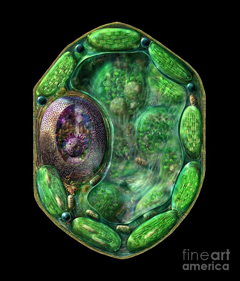 Biochemical Digital Art - Plant Cell by Russell Kightley