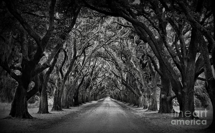 Oak Alley Photograph - Plantation Oak Alley by Perry Webster