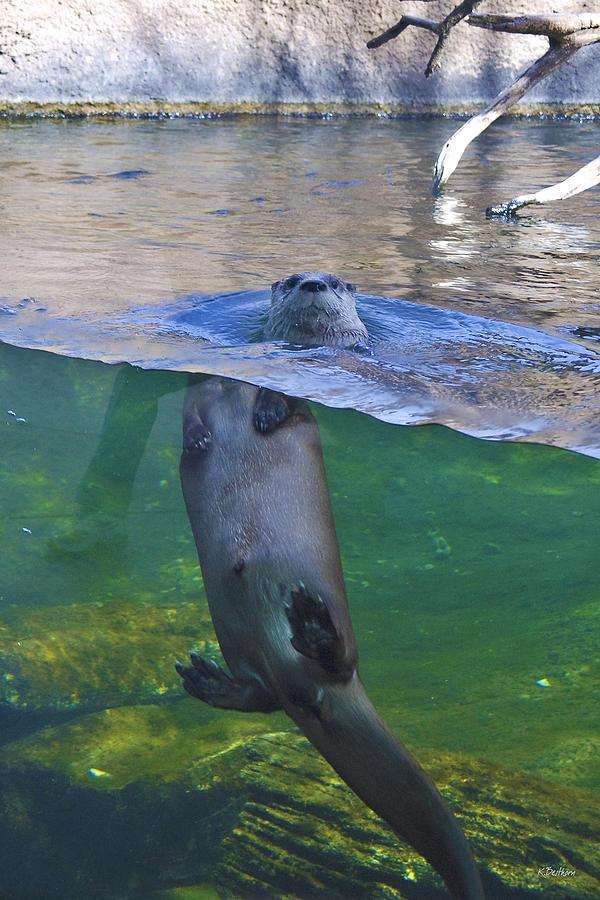 Otter Photograph - Playful Otter by Kat Besthorn