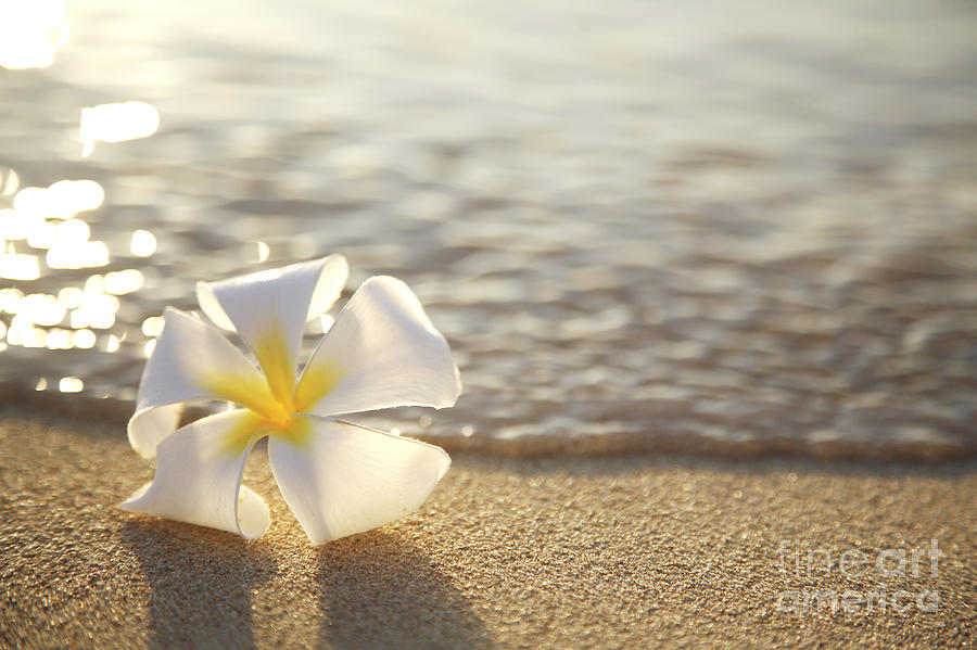 Plumeria On Beach Ii Photograph By Brandon Tabiolo