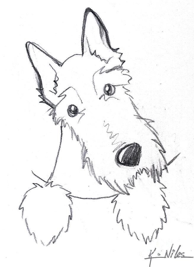 Scottie Drawing - Pocket Scottie Sketch by Kim Niles
