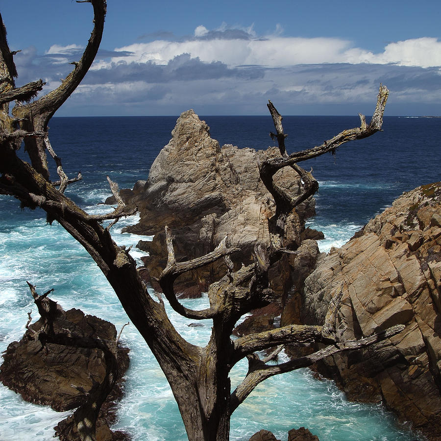 Point Lobos Rocks And Branches Photograph