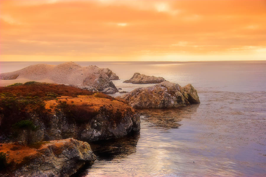 Point Lobos Photograph - Point Lobos  by Utah Images