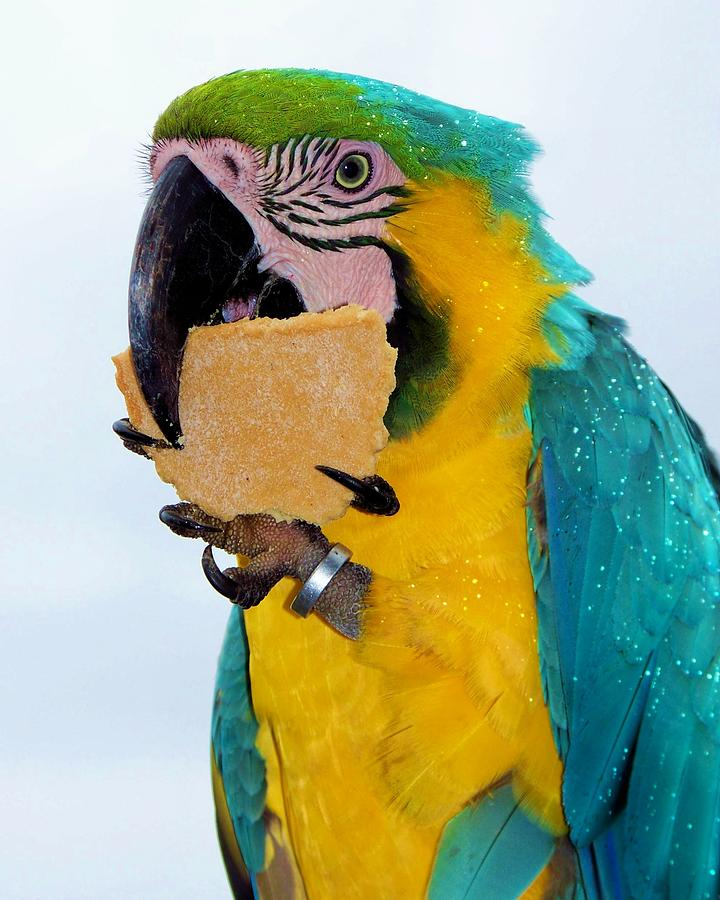 """""""Polly Want A Cracker?"""" Is An Old-time Meme"""