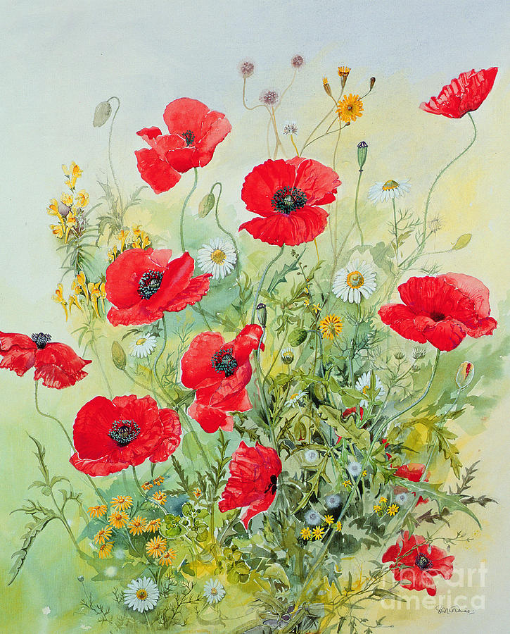 Flowers; Botanical; Flower; Poppies; Mayweed; Leaf; Leafs; Leafy; Flower; Red Flower; White Flower; Yellow Flower; Poppie; Mayweeds Painting - Poppies And Mayweed by John Gubbins