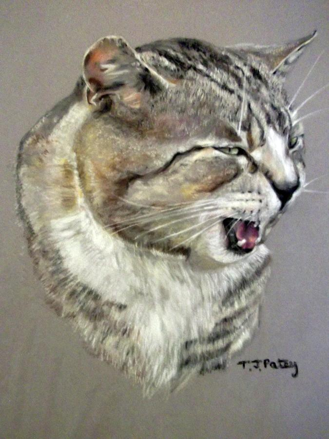 Cat Painting - Poppit by Tanya Patey