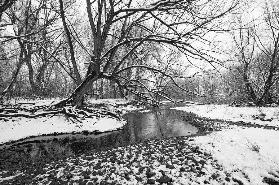 Fine Art Black And White Greeting Cards. Fine Art Black And White Snow Photography. Black And White Photographs. Fine Art Black And White Pictures. Black And White Winter Photography. Fine Art Black And White Wall Art. Wall Art Black And White. Black And White Tree Greeting Cards. Black And White River Photography. Photograph - Poudre Black And White by James Steele