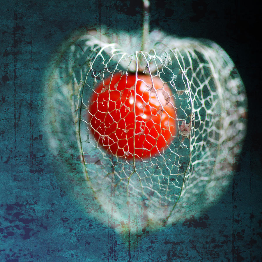 Physalis Photograph - Prison Of Love by Philippe Sainte-Laudy