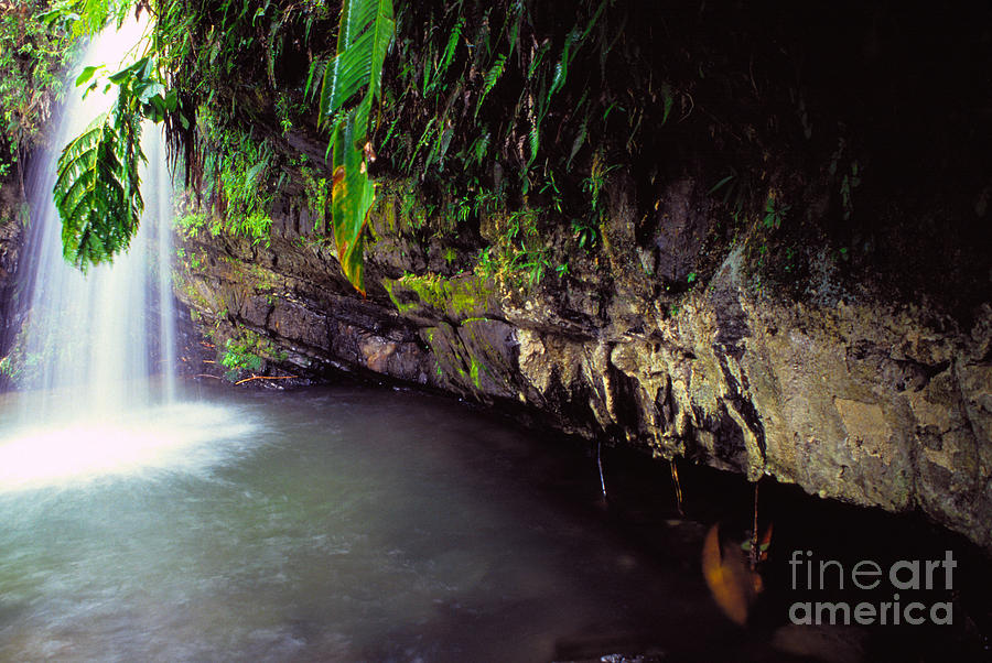 Puerto Rico Photograph - Puerto Rico Waterfall by Thomas R Fletcher
