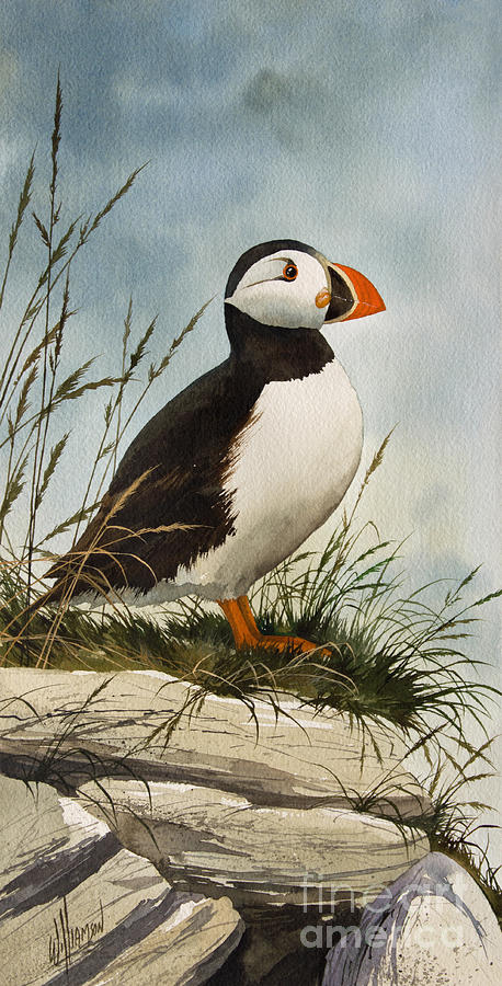 Puffin Fine Art Print Painting - Puffin by James Williamson