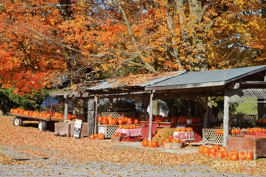 Shed Photograph - Pumpkins For Sale by Louise Heusinkveld