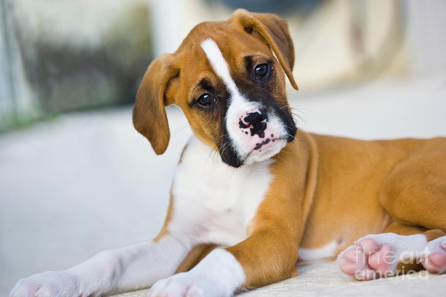 Innocence Photograph - Puppy by Juan  Silva