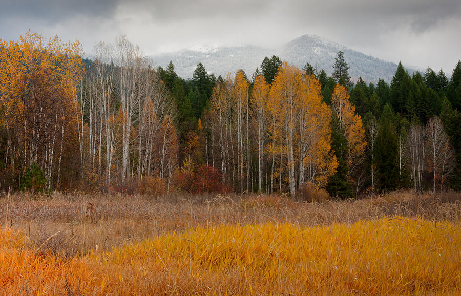 Kaniksu National Forest Photograph - Purcell Gold by Idaho Scenic Images Linda Lantzy