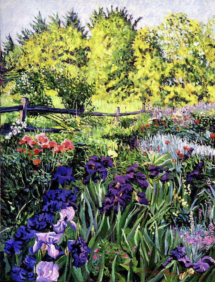 Irises Painting - Purple Garden by David Lloyd Glover