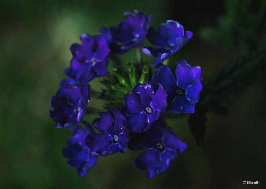 Digital Art Digital Art - Purple In The Evening by William Martin