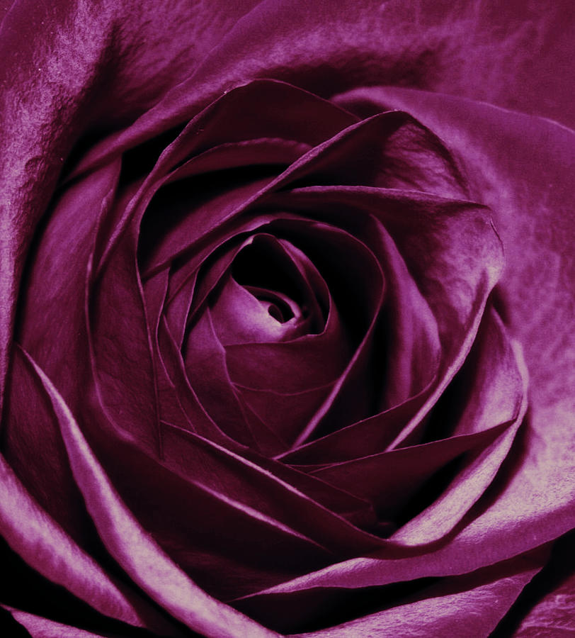 Flowers Photograph - Purple Passion by Cathie Tyler