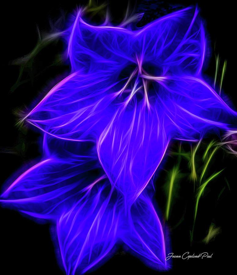 Purple Balloon Flower Photograph - Purple Passion by Joann Copeland-Paul