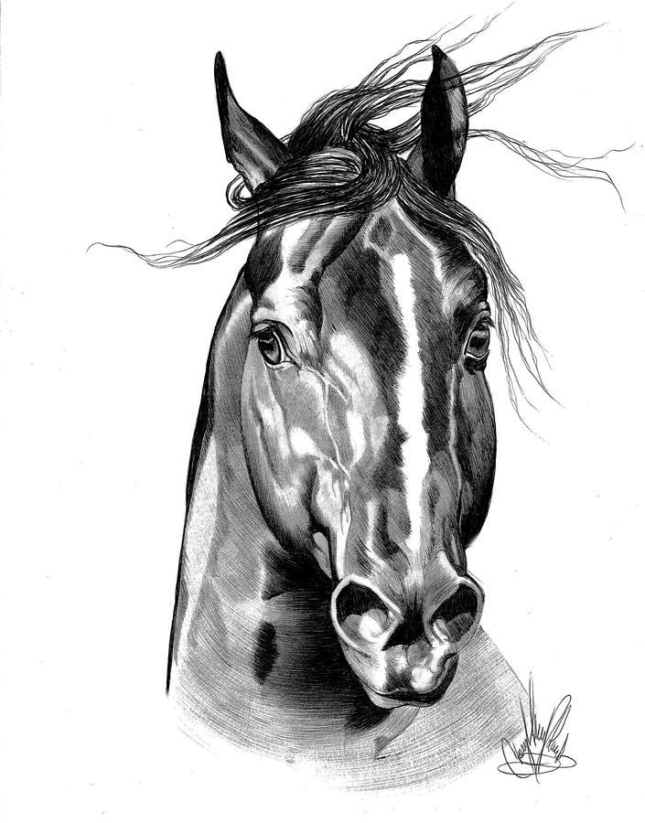 Quarter Horse Head Pai...