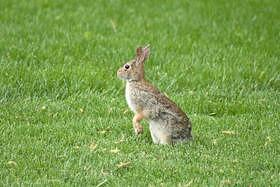 Rabbit Photograph - Rabbit by Tony Zupancic