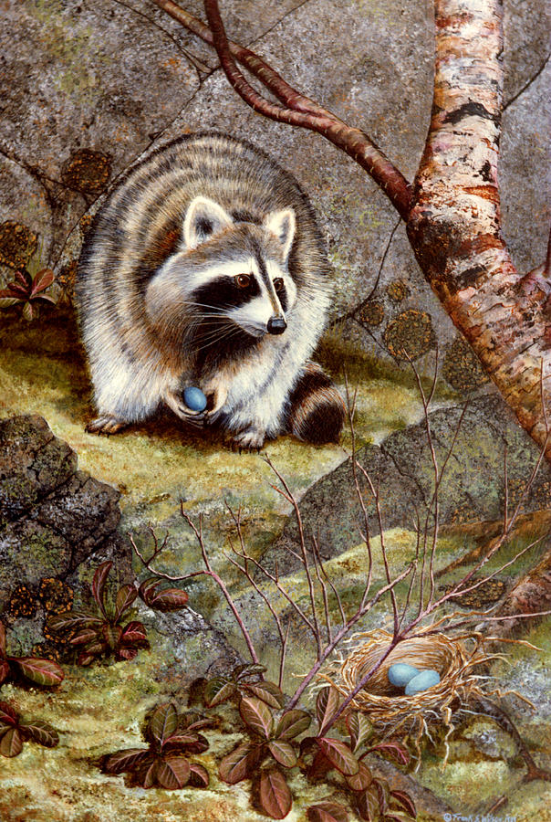 Raccoon Found Treasure Painting by Frank Wilson Raccoon Painting