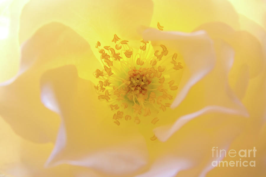 Flower Photograph - Radiant Gift by Julia Hiebaum