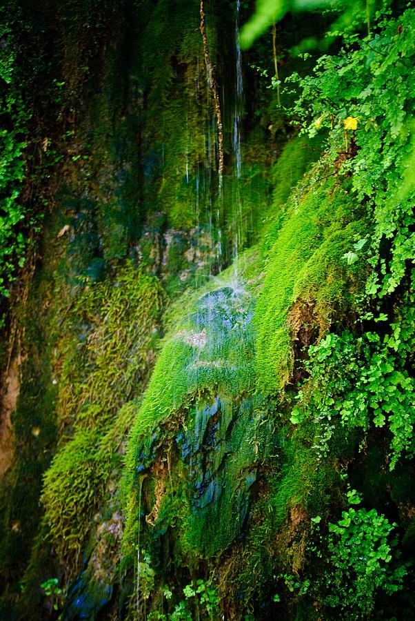 Arizona Photograph - Rain Forest by Louis Dallara
