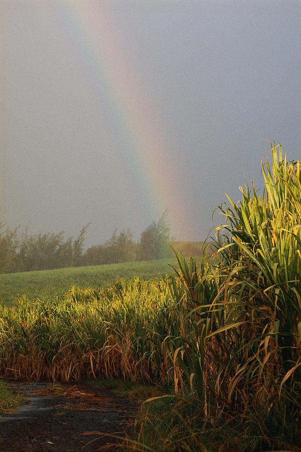 Vertical Photograph - Rainbow Arching Into Field Behind Stream by Stockbyte