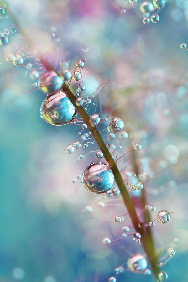 Macro Photograph - Rainbow Blue Smokey Drops by Sharon Johnstone