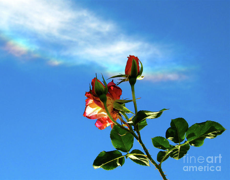 Rainbow Cloud And Sunlit Roses Photograph