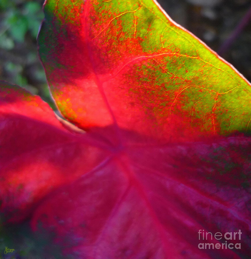 Rainbow Coleus Photograph - Rainbow Coleus 2 by Jeff Breiman