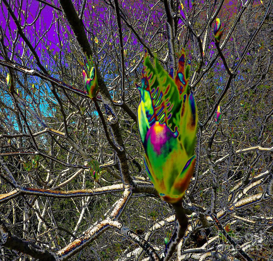 Surreal Photograph - Rainbow Explosion by JoAnn SkyWatcher