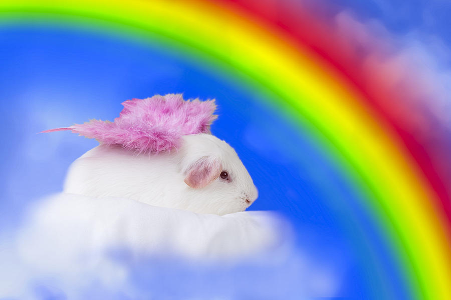 Rainbow Guinea is a photograph by Erin Bonilla which was uploaded on ...