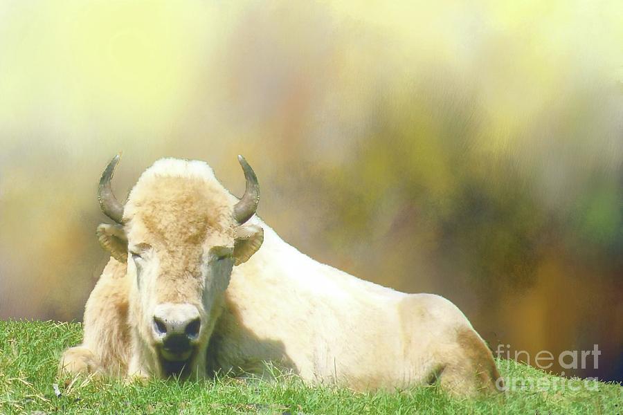 White bison wellbriety