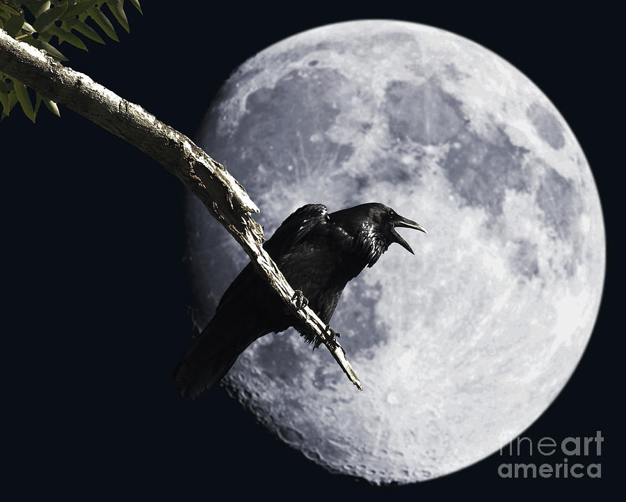 Wingsdomain Photograph - Raven Barking At The Moon by Wingsdomain Art and Photography