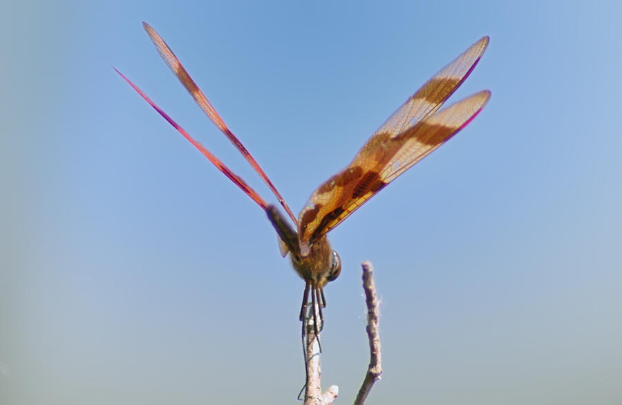 Dragonfly Photograph - Ready For Take Off by Bill Cannon