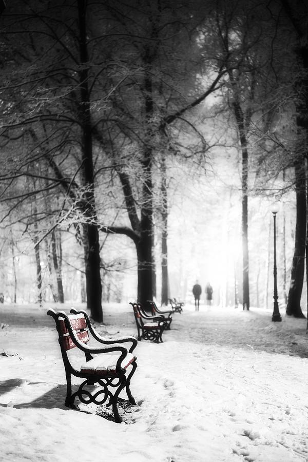 Winter Photograph - Red Benches In A Park by Jaroslaw Grudzinski