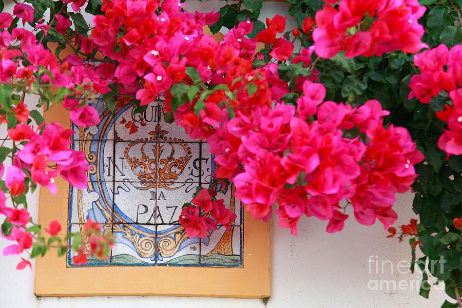 Bougainvilleas Photograph - Red Bougainvilleas by Gaspar Avila