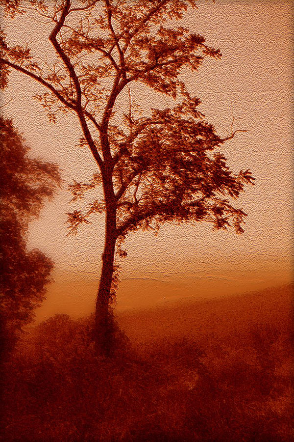 Red Dawn Photograph
