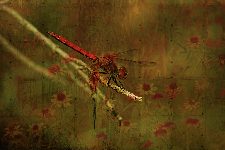 Red Dragonfly Photograph - Red Dragonfly Dining by Bonnie Bruno