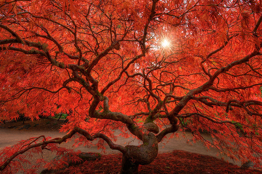 Fall Photograph - Red Lace by Dan Mihai