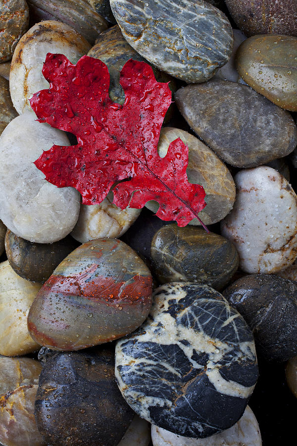 Red Leaf Wet Stones Photograph