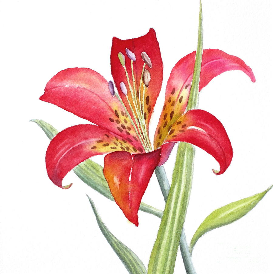 Red Lily is a painting by Deborah Ronglien which was uploaded on ...