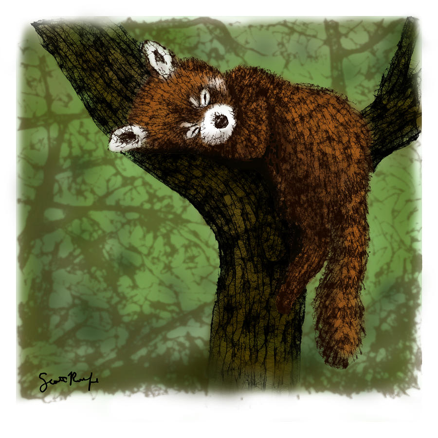 Red Panda Drawing - Red Panda Napping by Scott Rolfe