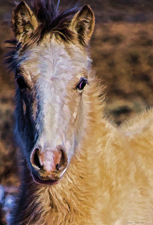 Red Willow Pony Photograph