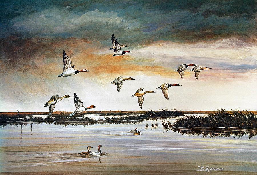 Wildlife Painting - Redheads In Flight by Raymond Edmonds