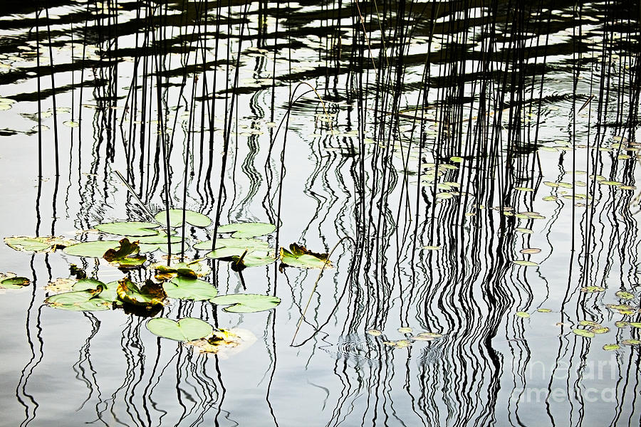 Abstract Photograph - Reeds And Reflections by Dave Fleetham - Printscapes