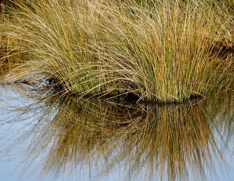 Reflecting Reeds Photograph