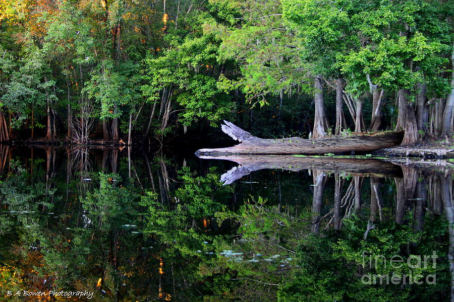 Reflection Photograph - Reflection Off The Withlacoochee River by Barbara Bowen