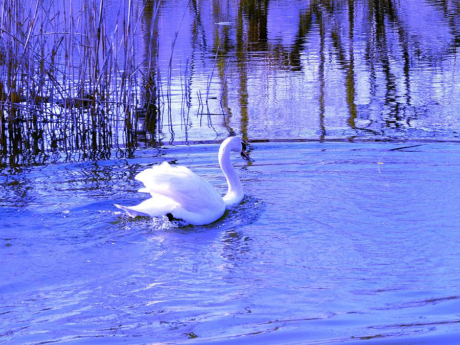 Landscape Photograph - Reflections In Blue by Kendall Eutemey