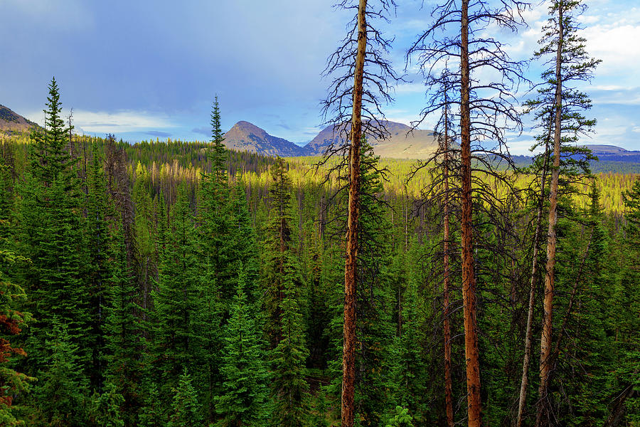 Reids Peak Photograph - Reids Peak by Chad Dutson
